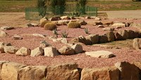The Arboretum has built a rock garden for plants from the hot deserts of North America